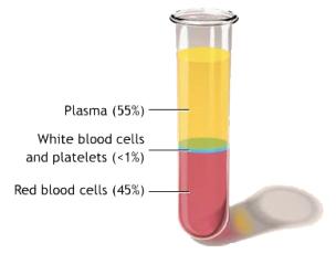 PlateletRichPlasmaTherapy2